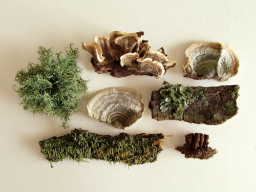 featherandmoss:  Lichen and mushroom collection!  (get it here)