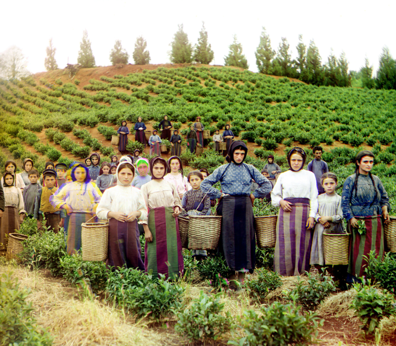 Original Description: Group of workers harvesting tea. Greek women. Taken between 1905 and 1915. From the Sergei Mikhailovich Prokudin-Gorskii Collection (Library of Congress).
