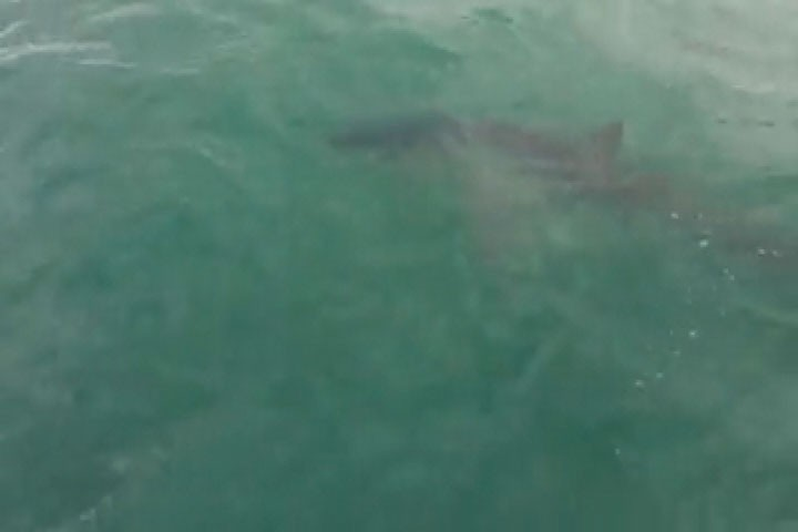 Was a great white shark spotted in the Atlantic?