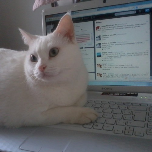 "thefluffingtonpost:  Kitty Regrets Spending Life Savings on Promoted Tweets Though they are definitely part of the 1%, cats have never been known as great money managers.  They tend to come from old money, and they're terrible at spending it wisely. With the advent of the Internet, there are more ways than ever for cats to blow their fortunes. It should be no surprise, then, that a cat named Aisha spent her entire life savings on promoted tweets.  ""What really boggles my mind,"" said Joe Ramirez, a financial manager who attempted to dissuade the kitty from spending her money on the tweets, ""is that she wasn't even promoting anything that would make her more money. It was just jokes and memes."" Aisha has moved back in with her mom. She did not wish to comment for this piece, except to convey that she regrets spending so much money on Twitter marketing. Via carolsales__."