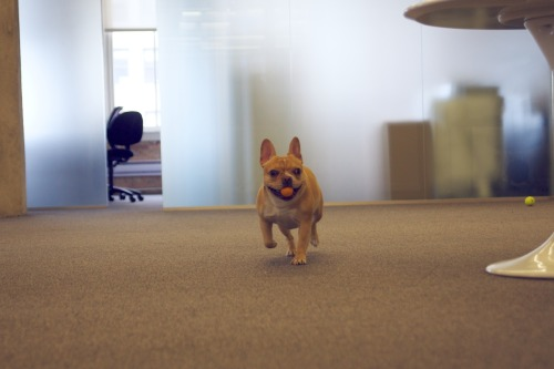 tinyclicks:  Pony, the patent-pending loaf-based ping pong ball retrieval system!  Pony Charisma, loaf of all trades!