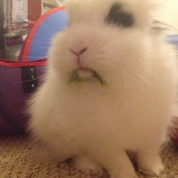 I didn't eat ur veggies mommy…. 😂 Lol #ilovebunny