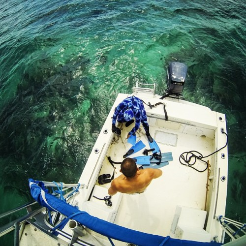 .quick swim 🐳. #freediving #ocean #boat #keys @ircadiente @spearfishingworld