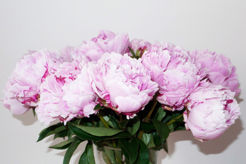 terrysdiary:  My favorite flowers are Peonies #4  samsies, i need some in my life atm