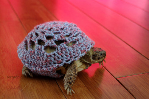 turtlefeed:  OH MY GOD   This is what a tortoise would look like if my late grandmother had owned one, everyone in her family had things knitted for them and there were knitted coverings on many household objects in her flat.