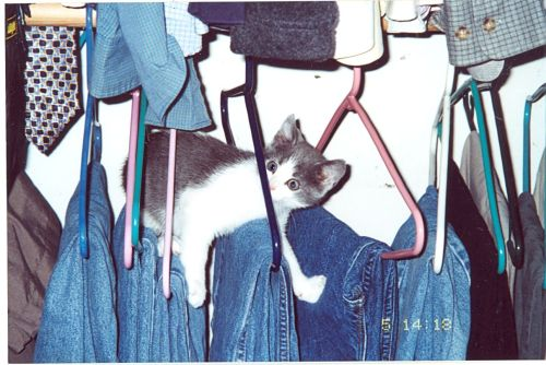 get down from there cat. you cannot borrow my jeans.