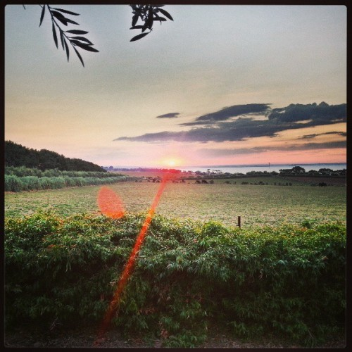 Sunset… #dons60th #newbeergarden #sunset  (at Rusty Gate Estate)