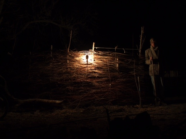 Nighttime tree planting.We picked up a gaggle of bare root trees, and they needed to go in the ground…so in they went…by headlamp. Two Chinese Apricots, two Baby Crawford Peaches, two Seckel pears and six Red Ruby Grapes.