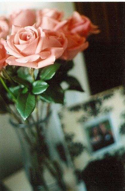stored-snapshots:  Pink Roses by S. Shorey on Flickr.