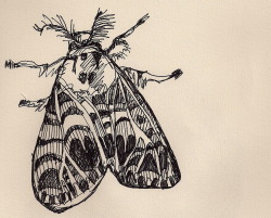 the59thstreetbridge:  Found this little moth sketch in one of my old sketchbooks.