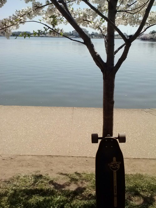 perfect skate day, down by the cherry blossoms at the dc tidal basin