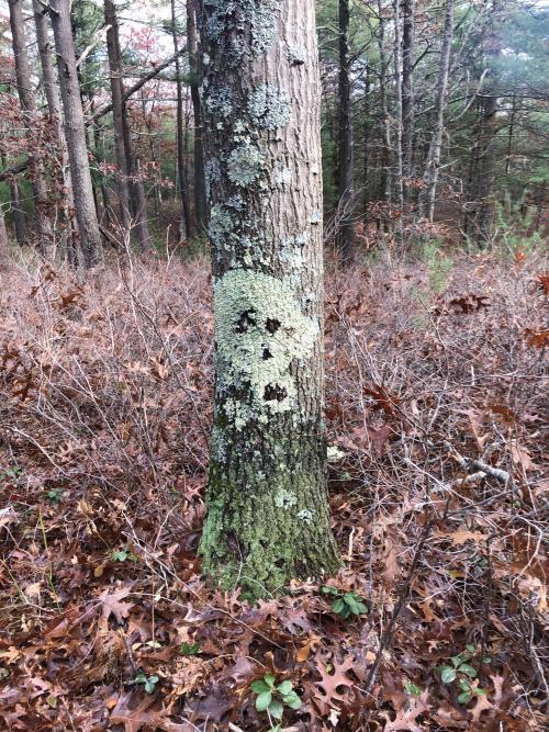 This mossy looking skull on a tree. #interesting#wow#wtf#weird#crazy#reddit#odd#interest#mundane #This mossy looking skull on a t