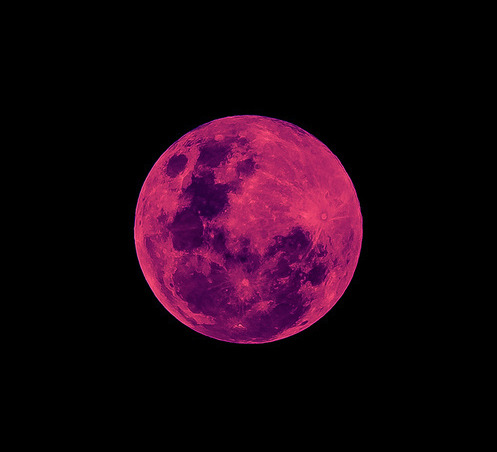 "spaceplasma:  Keep An Eye Out For Thursday's 'Pink Moon' If you glance up in the sky on Thursday, keep and eye out for the pink moon. Named for the brilliant pink phlox that once signaled the arrival of Spring, the moon will be at its fullest at 3:57 p.m. EDT April 25. First of all: No, it's not pink The spoiler is, Pink Moons are not really pink. It is simply the name for full moon that happens during the month of April — similar to February's snow moon. UPI.com reports that the moon might actually be slightly pink this year because of the lunar eclipse that's set to happen in the afternoon. So, why the name? The ""pink moon"" name is part of a naming tradition traceable to Native American tribes. Full moons during different times of the year signaled changes in the seasons and other important dates (Farmer's Almanac offers a handy breakdown). Full Corn moon meant it was time to pick corn, Full Buck Moon shone at around the time of year deer bucks were sprouting antlers, and Full Sturgeon Moon probably coincided with sturgeon-fishing season. Pink moon is so named because it occurred at around the time the plant wild ground phlox begins to blossom. Indigenous Americans took this as a sign that Spring had arrived. But there will be a lunar eclipse, right? Eh, sort of. Some say that the Pink Moon may be especially worth stealing a glance this year, owing"