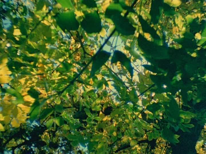 Cat of the Worm's Green Realm, 1997, Stan Brakhage