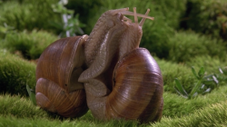 drunj:  snails kissing