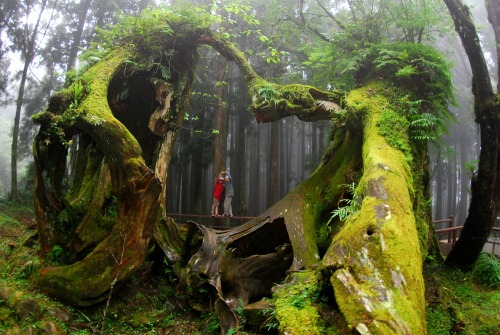 sixpenceee: