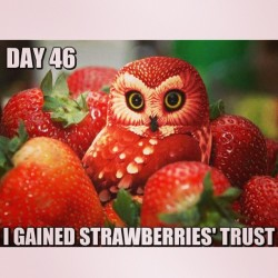 Spare those strawberries, you sneaky owl! :3  Those are mine!! 
