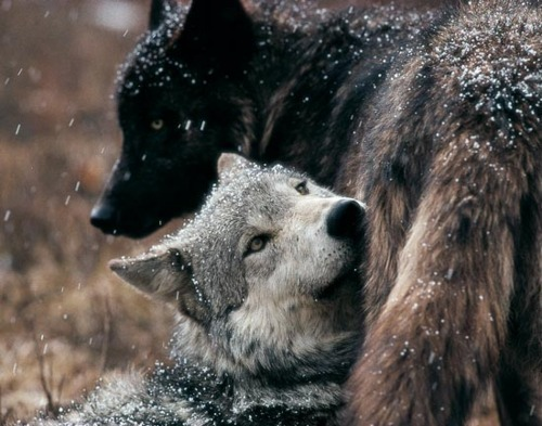 If you live among wolves you have to act like a wolf. ~Nikita Khrushchev~