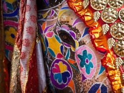 Amazing decorated Elephant ~ Elephant festival Jaipur, India