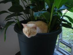 getoutoftherecat:  get out of there cat. you are not leafy.
