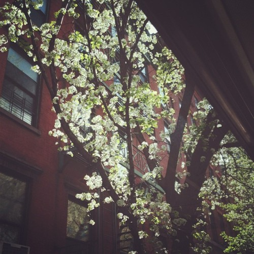New York in spring. I am spoiled.