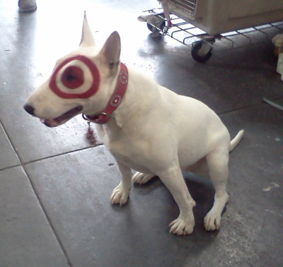 Bullseye is in the house! We welcome Target's legendary mascot, Bullseye the Bull Terrier, to our studios this morning! She is quite the ladies' favorite! We are beyond excited to announce that Target will be one of the brands to show at our petitePARADE x VOGUE Bambini Kids Fashion Week NYC! Stay tuned on our blog, Twitter, and Instagram for coverage of their show tomorrow!@target