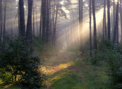faeriesandravens:  forest path by halina-anna on Flickr.
