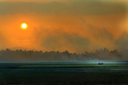 #sunrise #fog #field #nature (from @ed_yacob on Streamzoo)