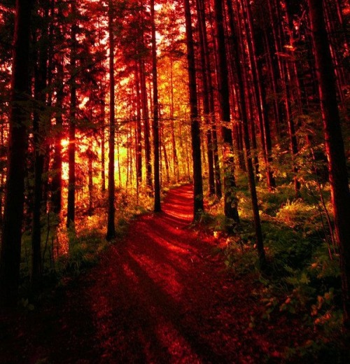 Crimson Forest, Finland photo via gina