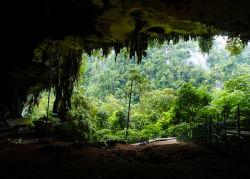 landscape trees travel forest cave tropical Asia rainforest jungle Malaysia Borneo