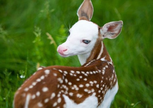 fawn be yourself be different be one of the kind