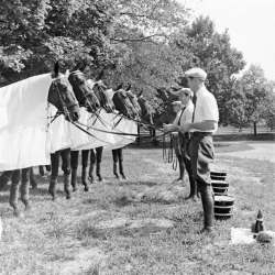 thecarycollection:  Jock Whitney's string of polo ponies!