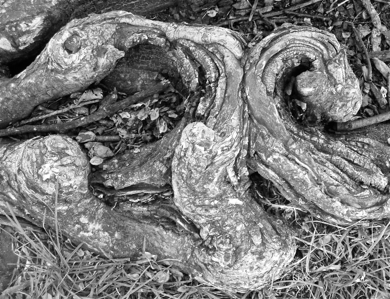 Gnarled III  National Mall, Washington, DC