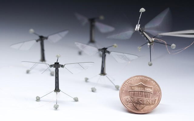 """Researchers build miniature flying robots, modeled on Drosophila"" We may not be at fruit fly level yet, but researchers are giving the insects some competition. Today's issue of Science reports on miniature flying robots that aren't much bigger than a coin. The power and control are handled externally, but the tiny robots can still perform basic maneuvers, and they have enough lift to spare that they could fly under their own power for a few minutes if the right power storage were developed. ____________________ Noting the concept of Moore's Law, you should be wonderfully afraid."