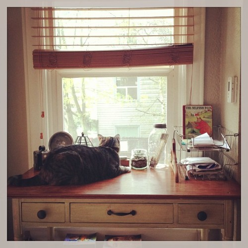 Cats on desks and desks on cats. #kingsley #bedroom #design #decorating  (at Hogwarts School of Witchcraft and Wizardry)