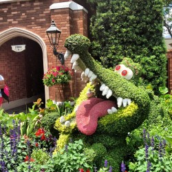 #disney #waltdisneyworld #epcot #flowerandgarden #croc #uk