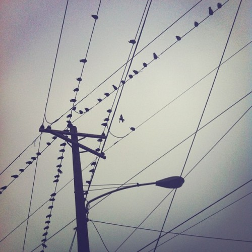 Birds plotting to poo on me…. | #philly