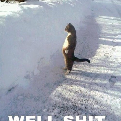 #haha #lol #funny #laugh #life #cat #animal #nature #snow #curse #pic