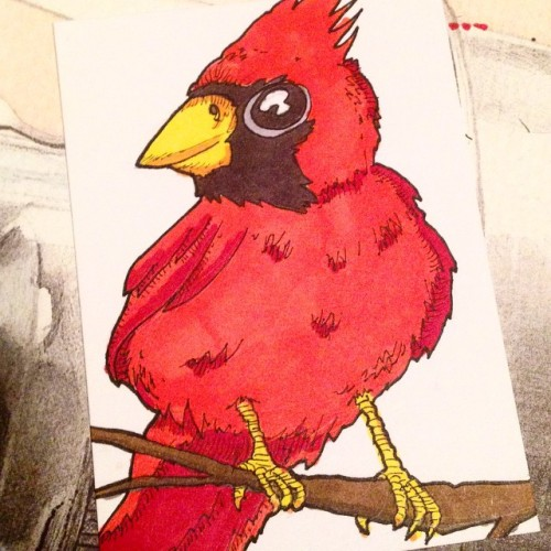 it's a cardinal