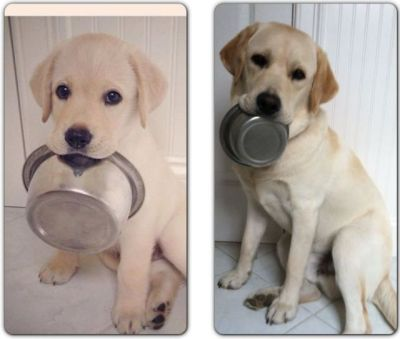 bunnyfood:  Then and Now