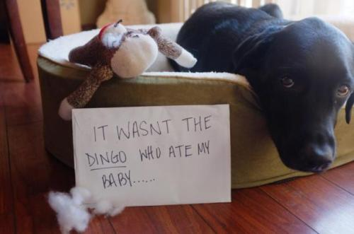 It Wasn't the Dingo… It wasn't the Dingo who ate Olly's baby……View Post