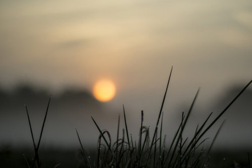 morning dew grass by pijnapple