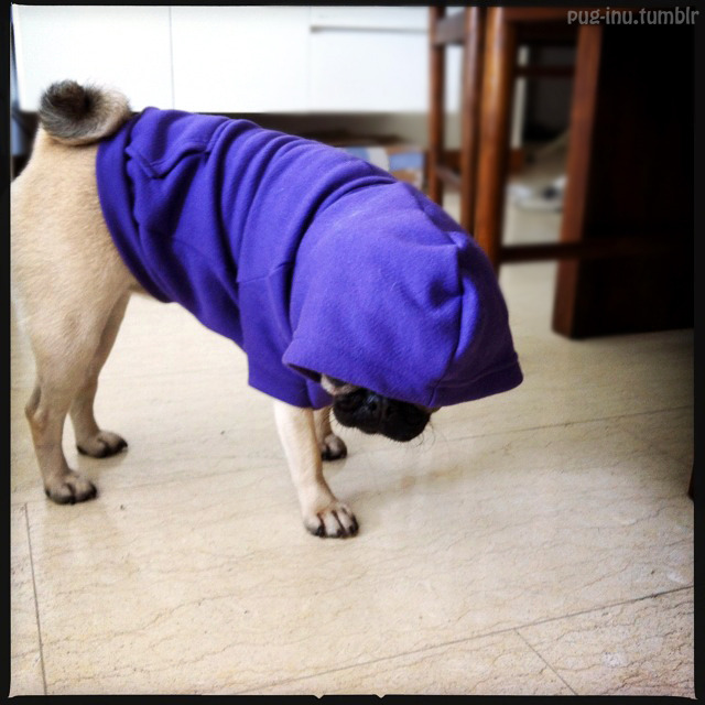 pug-inu:  Pug N the Hood.  Inu being gangsta and bustin' moves.