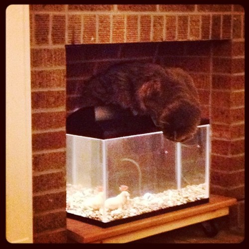 no, YOU thought it was a good idea to put the fish tank on the floor. it was YOU