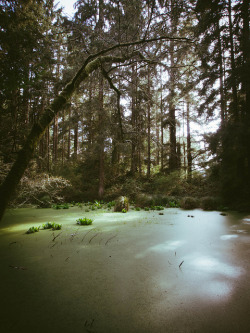 6o4:  Forest Pond by K. Castl on Flickr.