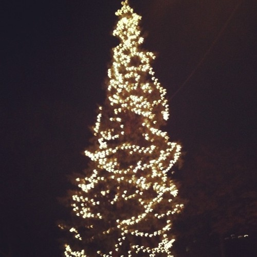 Our deformed Christmas tree #KindredSpirits (at Tompkins Square Park)