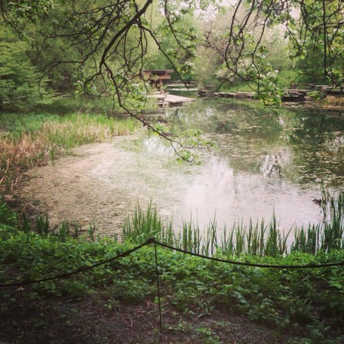 Day at the #pond #green #plants #nature