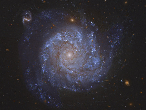 NGC 1309: Spiral Galaxy and Friends A gorgeous spiral galaxy some 100 million light-years distant, NGC 1309 lies on the banks of the constellation of the River (Eridanus). NGC 1309 spans about 30,000 light-years, making it about one third the size of our larger Milky Way galaxy. Bluish clusters of young stars and dust lanes are seen to trace out NGC 1309's spiral arms as they wind around an older yellowish star population at its core. Not just another pretty face-on spiral galaxy, observations of NGC 1309's recent supernova and Cepheid variable stars contribute to the calibration of the expansion of the Universe. Still, after you get over this beautiful galaxy's grand design,check out the array of more distant background galaxies also recorded in the above, sharp, reprocessed, Hubble Space Telescope view.  Space. The final frontier.