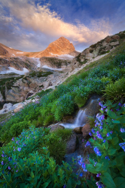 -vvaste:  High Alpine Garden (by Erik Page Photography)