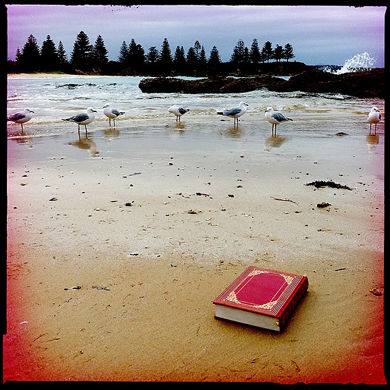 rhondaayliffe:  Rhonda Ayliffe one red book, seven seagulls and the pines of Bermagui headland (via art and etc: TAG - 4…)